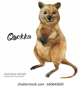 Australian animals watercolor illustration hand drawn wildlife isolated on a white background. Quokka. Australia Day