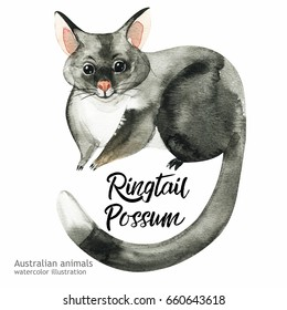 Australian animals watercolor illustration hand drawn wildlife isolated on a white background. Ringtail Possum. Australia Day