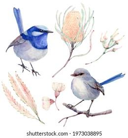 australian bird watercolor illustration. superb fairy wren