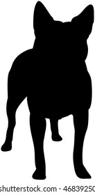 Australian Cattle Dog Silhouette