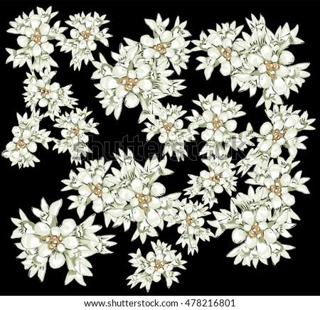 Australian native flowers white on black stock illustration australian native flowers white on black background conospermum elipicum white blooms tinted with mightylinksfo