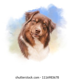 Australian shepherd dog. Head of a companion dog on watercolor background. Animal art collection: Dogs. Cute realistic puppy Portrait. Hand Painted Illustration of Pet. Design template. Good for print