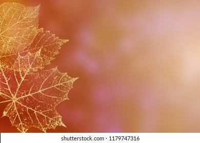 Autumn bright color horizontal background. Beautiful orange gold transparent skeleton leaves delicate pattern texture on red green pink background with space for text.