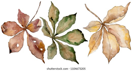 Autumn chestnut leaves. Leaf plant botanical garden floral foliage. Aquarelle leaf for background, texture, wrapper pattern, frame or border.