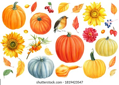 Autumn clipart of pumpkins, flowers sunflowers, dahlia, leaves, sea buckthorn, robin, watercolor hand drawing