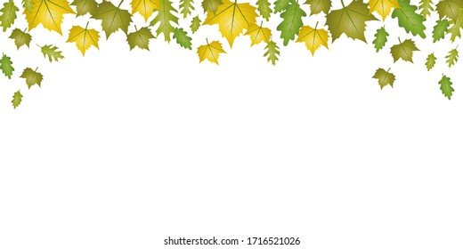 autumn green and yellow falling leaves on white background illustration