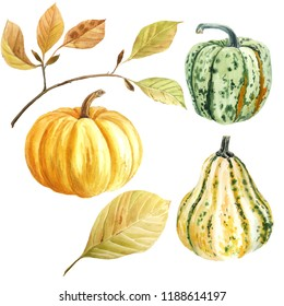 Autumn has come! The pumpkins rushed! Pumpkins and autumn leaves. It is suitable for autumn, weddings, invitations, Thanksgiving day, harvest festival and much more ...