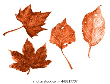 Autumn leaf - fallen leaves - plane, maple, birch, beech - hand crayon drawing