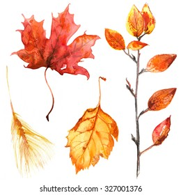 Autumn leaves painted with watercolors on white background. Coloured bright leaves hand-painted, paint, taktura, watercolor. Dry branch, Maple Leaf