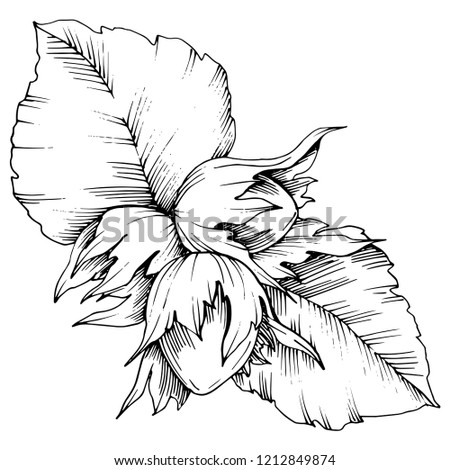 Autumn Plant Hazel Nut Leaf Plant Stock Illustration 1212849874