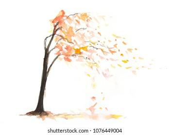 Autumn tree on white, watercolor illustrator