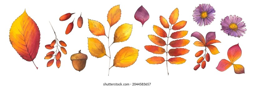 Autumn watercolor set of fall leaves, acorn, berries, aster flowers. Hello Autumn! design elements. Hand drawn illustration for seasonal advertisement, invitations, postcards