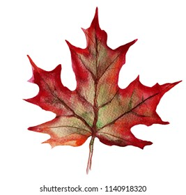 Autumnal leaf of a maple. Watercolor stock illustration