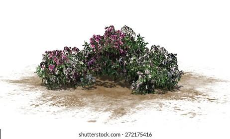 azalea flowers cluster - isolated on white background