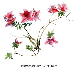 Azalea pink, flowering branches watercolor sketch
