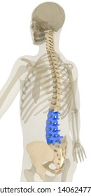 Back 45 degree rotation view of human spine and pelvis. Lumbar vertebrae (L1-L5) highlighted in blue. Includes pelvis, sacrum and cervical (C1-C7), thoracic (T1-T12) a lumbar vertebrae. 3D rendering