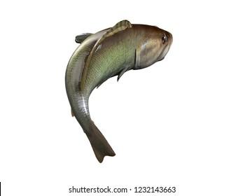 Back view of lake river largemouth black bass fishing 3d render