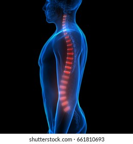 Backbone intervertebral disc anatomy. 3D