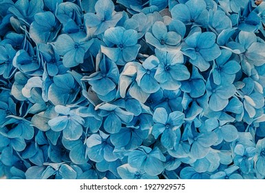 Background from blue hydrangea flowers. Oil painting imitation. 3D illustration.