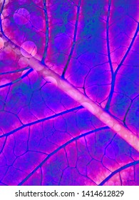 Background in the form of purple leaf closeup. For medicine, treatment, health, cosmetics, natural products. Diagonal arrangement