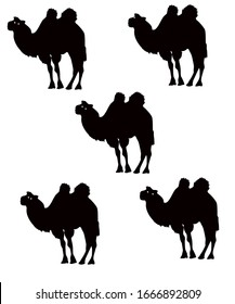 background of a harmonious set of camels.