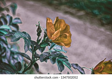 Background. Roses. Flowers. Stylization: watercolor.Vintage.