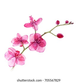 Background texture of watercolor. Postcard pink orchid. Picture used as a template. The picture can be used in your wedding business.