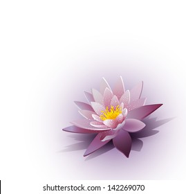background with a water lily on the white background