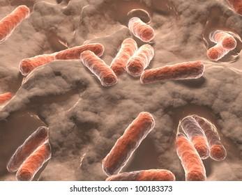 Bacteria, bacilli