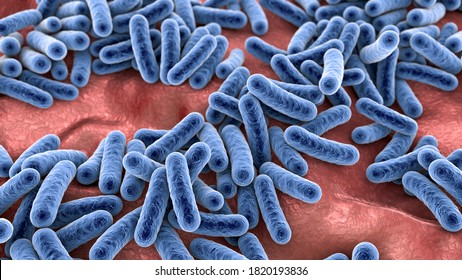 Bacteria, human microbiome, normal microflora of human body, 3D illustration