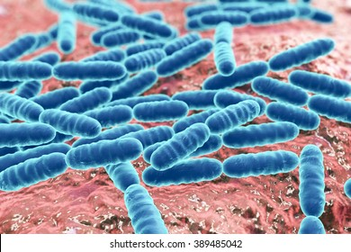 Bacteria Lactobacillus, gram-positive rod-shaped lactic acid bacteria which are part of normal flora of human intestine are used as probiotics and in yoghurt production, close-up view