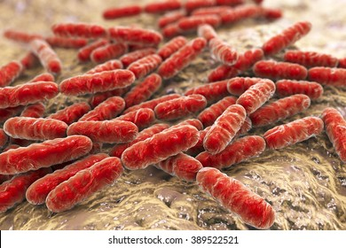 Bacteria Lactobacillus, lactic acid bacteria which are part of normal flora of human intestine and are used as probiotics and in yoghurt production, 3d illustration