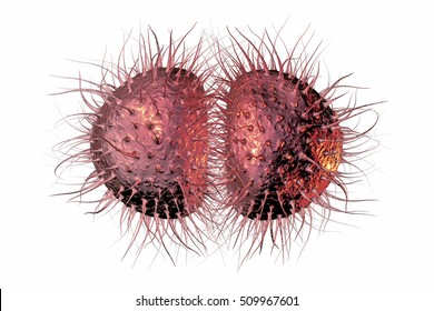 Bacteria Neisseria gonorrhoeae or Neisseria meningitidis, gonococcus and meningococcus, 3D illustration. Bacteria which cause gonorrhea and meningitis