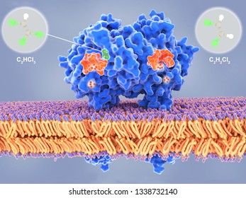 Bacterial dehalogenases remove halogen atoms from organic compounds. Dehalogenases may be used as a way to clean up areas polluted with halogenated compounds. 3d rendering