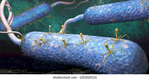 Bacteriophage or phage virus attacking and infecting a bacteria - 3d illustration