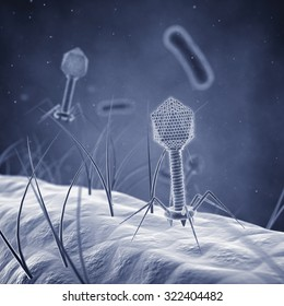 Bacteriophage viruses infecting bacterial cells , Bacterial viruses