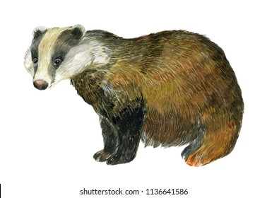 Badger watercolor illustration on isolated white background