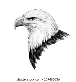 Bald eagle head sketch in a detailed side view drawing of the United States of America's national bird that has fierce looking eyes and sharp pointed beak and is isolated on a white background.