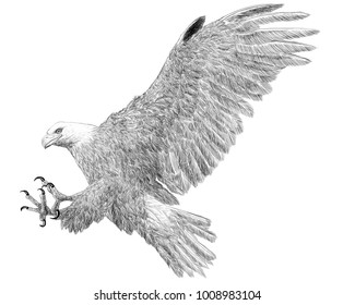 Bald eagle landing attack hand draw sketch black line on white background illustration.