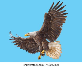 Bald eagle landing on sky hand draw and paint illustration.
