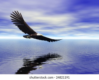 Bald Eagle over Water