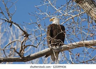 Bald Eagle Park City Utah