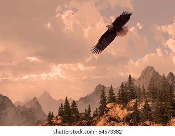 Bald eagle soaring in the Rocky Mountain high country.