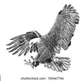 Bald eagle swoop attack hand draw sketch black line on white background illustration.