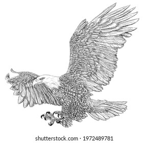 Bald eagle swoop attack winged hand draw sketch black line doodle monochrome on white background