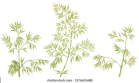 Bamboo branches isolated watercolor illustration. Green rainforest tree branches with leaves. Hand painted green bamboo plant background. Fresh stems with leaves, tropical rainforest twigs, branches