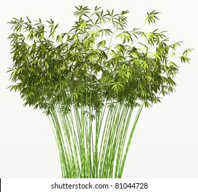 Bamboo bush or tangle isolated over white background