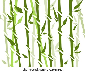 Bamboo forest set. Nature Japan, China. Plant