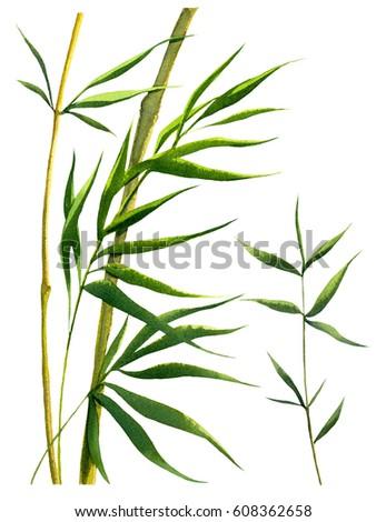 Bamboo Leaves Frames Watercolor Illustrations Stock Illustration ...