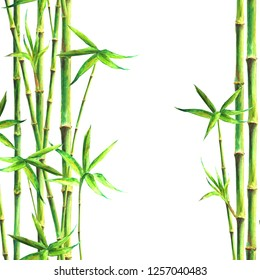 Bamboo spa background. Watercolor hand drawn green botanical illustration with space for text. Watercolour bamboos plants isolated on white square background. Chinese oriental border frame design.